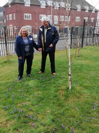 RIBI President Debbie Hodge with her husband Mike, admiring the purple crocus blooms marking Rotary's efforts to End Polio Now