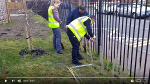 Hedge-planting starts on Rotary Peace Garden